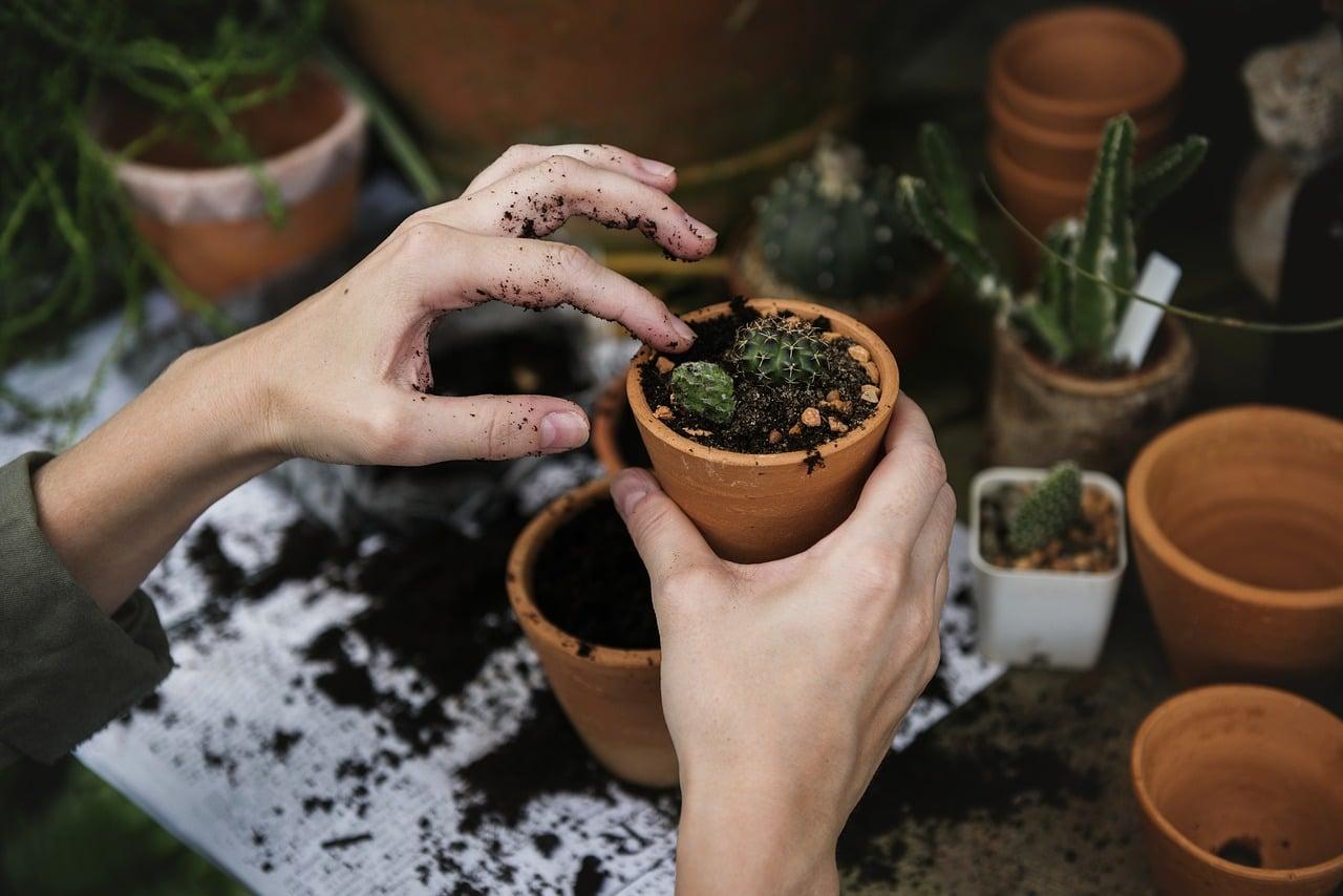 Qu'est ce que le jardinage de rocailles ?