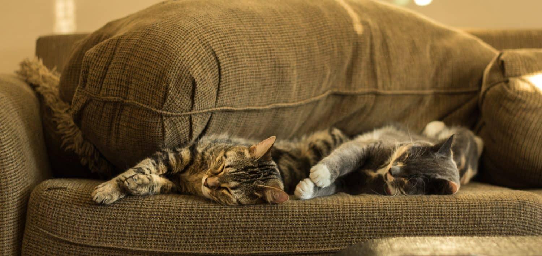 Quel genre de canapé avec un chat?