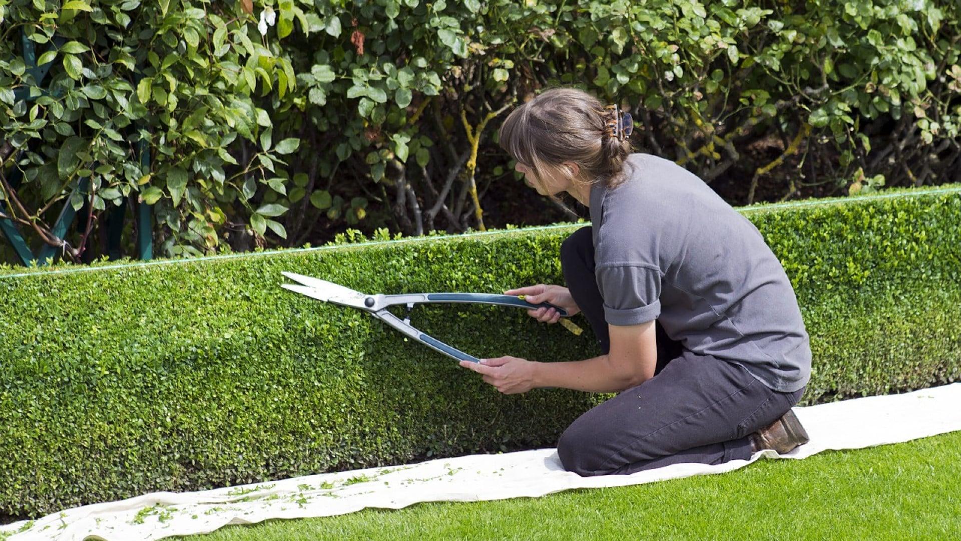 Astuces pour bien aménager votre jardin