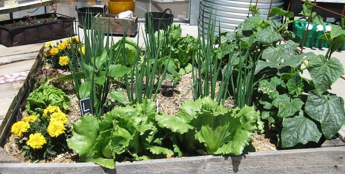 Comment jardiner bio