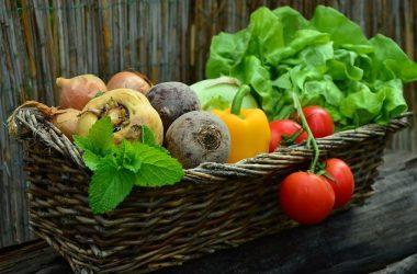 Top 3 des astuces pour réussir votre jardin potager
